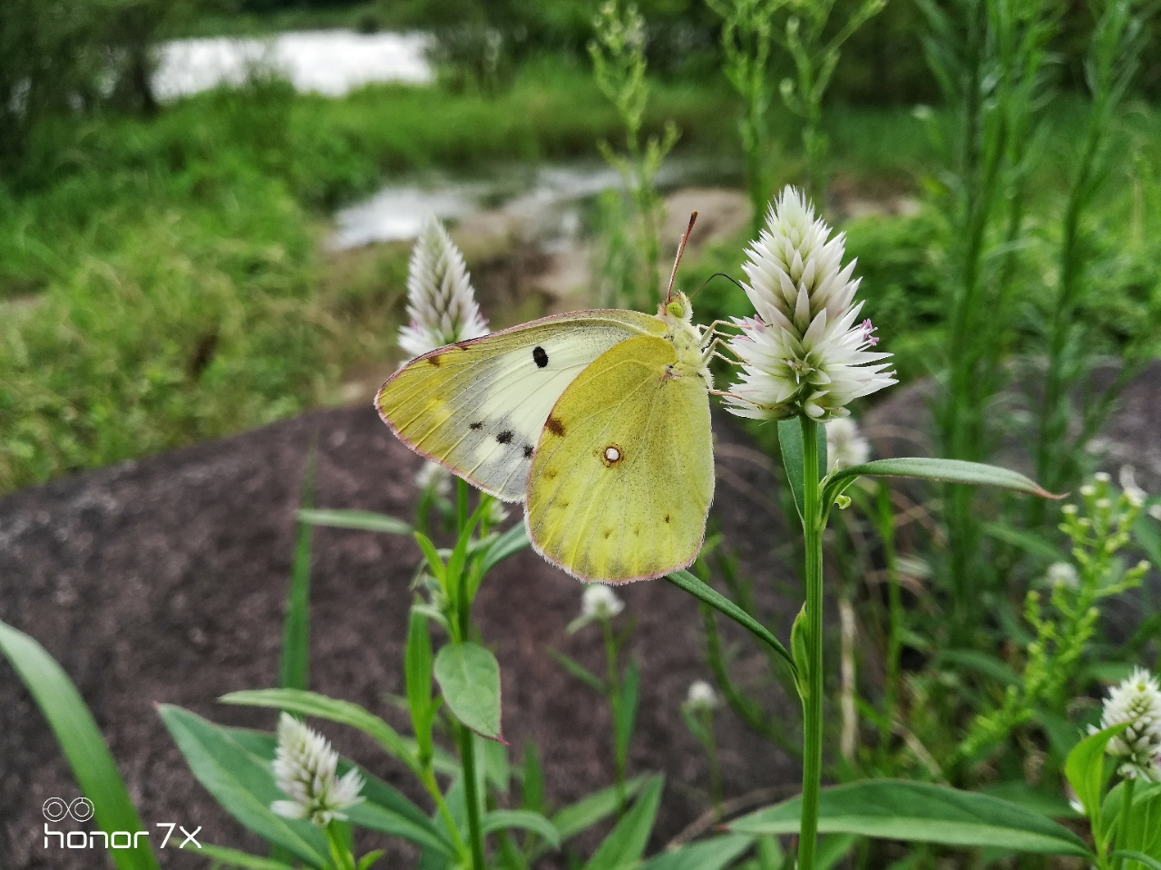夏之情 蜻蜓 蝴蝶与小蜜蜂 摄影摄像 市民网 Discuz